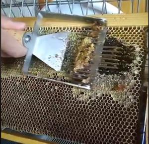 Ακατέργαστο μέλι- epimelos